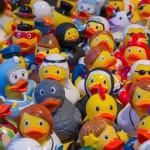 toy-ducks-535335_960_720